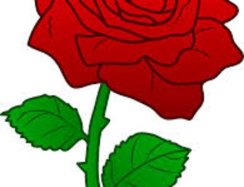 ROSES FOR BIRTHRIGHT